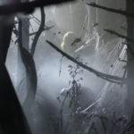 miejsca2_koncert_lasy_004_fot.m.szymonczyk_Easy-Resize.com
